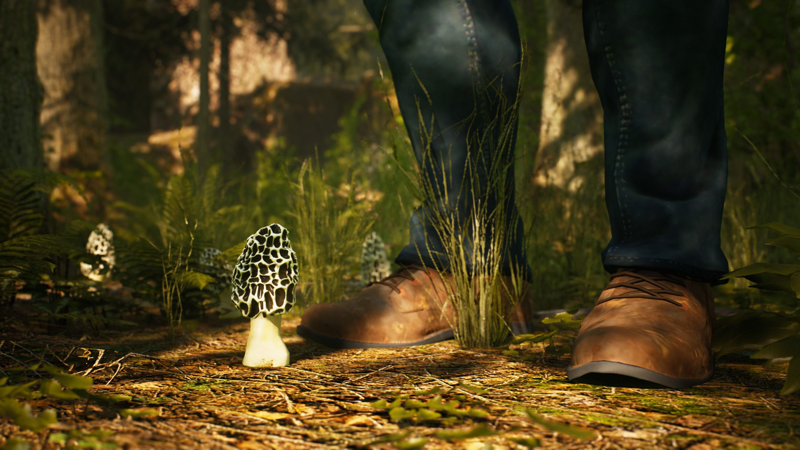 Morels: The Hunt is a Game About Hunting Mushrooms and Taking Photos
